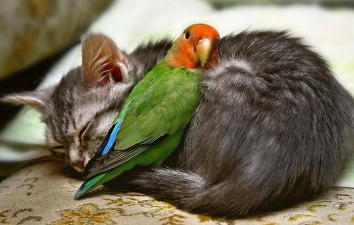 cat and parrot play image